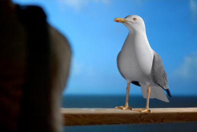 Seagull – When going abroad, go wise.